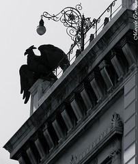 Museu da República_Rio de Janeiro (FM Carvalho) Tags: brazil blackandwhite bw white black rio branco brasil riodejaneiro museum blackwhite do museu catete eagle sony cybershot preto e da pretoebranco peb bew república sonycybershot palácio brésil antigo águia brancoepreto museudarepública paláciodocatete blackandwhitephotos rioantigo blackewhite blackwhitephotos hx9v sonyhx9v
