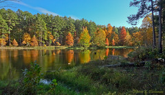 One Horse Gap Lake (3796) (sbuck1205) Tags: fallcolors shawneenationalforest onehorsegaplake