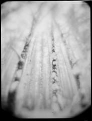 (NooFZz) Tags: bw tree landscape monocle 9x12 sakhalin svemafn64 bulldog4x5