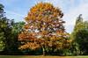 Baum im Herbst 18.10.2012