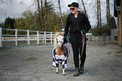 Jail Bird (horse) (Russ Beinder) Tags: horse bird halloween carson costume bc guard cop jail rowdy mapleridge equestrian prisoner canda 70200mmf28 mrec