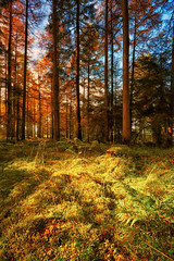 Sunlight In The Forest, Silpho - Explored 25/10/12 (mark_mullen) Tags: uk autumn england leaves forest woodland landscape countryside colours forestry scarborough northyorkmoors northyorkshire canon1740f4 forgevalley broxa canon5dmk3 silpho markmullenphotography