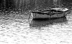 barca y gaviotas (indagar) Tags: pictures sea espaa seagulls mar spain meer photos fotos gaviotas mwen spanien donostia sansebastin