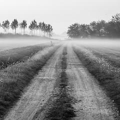 The last bridge - l'ultimo ponte (6962) (MattRAGO) Tags: ponte campagna matteo nebbia sentiero ultimo solitario foschia passeggiata novarese cameri cammino camminata autunnale rago mattrago