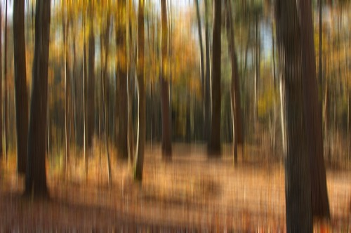 The Blurred Forest