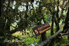 PhamonVillage-DoiInthanon-ChiangMai-Trip_By-P r i m t a a_E10886166-055