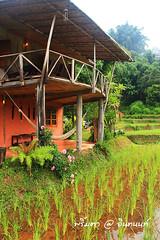 PhamonVillage-DoiInthanon-ChiangMai-Trip_By-P r i m t a a_E10886166-026