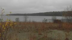 (novogorodec) Tags: wild usa lake fall ma clinton cranberry