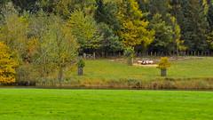 Autumn on Ragley Estate (bennatrinsphoto) Tags: nikon adobe nikkor afs dx lightroom lightroom3 d5100
