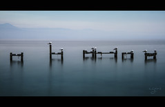 Blue melody (~Cess~) Tags: blue music lake france long exposure notes lac gans bleu note pause savoie leman ccile lman musique cess longue mygearandme mygearandmepremium mygearandmebronze mygearandmesilver mygearandmegold mygearandmeplatinum mygearandmediamond cessgans