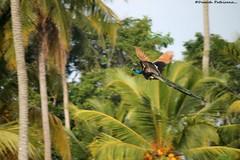 Birds of Sri Lanka