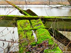 Old quay (bartjanmutters) Tags: road tree river sheep nederland linge schaap gorinchem rivier leerdam heukelum vuren lingewaal