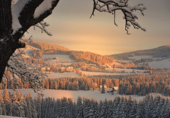 Wintermorgen im Joglland  -  Winter morning in Joglland (Mariandl48) Tags: schnee winter dorf im wald bauernhof stjakob morgensonne kirchturm obstbaum walde bestevercompetitiongroup bestevergoldenartists creativephotocafe besteverexcellencegallery