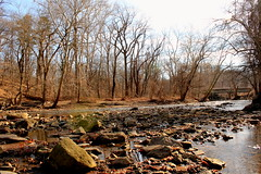 Pennypack Park Walk (philly369) Tags: city trees light sun tree philadelphia water leaves creek leaf state path walk philly rays pathway pennypack parkwinter