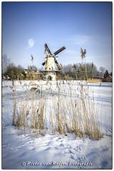 Snow, reed and a windmill (PvRFotografie) Tags: blue winter sky white snow ice reed windmill rotterdam blauw sneeuw lucht wit riet molen ijs windmolen rotterdamzuid nex5 sonynex