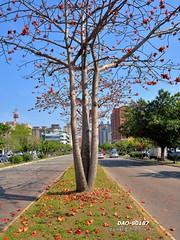DAO-80187 (Chen Liang Dao  hyperphoto) Tags: