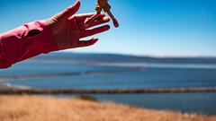 IMG_4526.jpg (edcool1_1) Tags: friends hike eastbaycrew fremont donedwardssanfranciscobaynationalwildliferefuge desfbnwr yotsuba yotsubato yotsubakoiwai    revoltech kaiyodo
