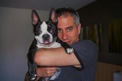 At Delta Hotel, Quebec city (lezumbalaberenjena) Tags: quebec city canada canad delta hotel dog chien perro boston terrier bully room habitacin habitacion chambre