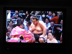 Relaxing by the television (seikinsou) Tags: japan nikko spring tv television sumo wrestle basho osaka