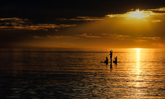 quiet paddle at sunset (mernamora) Tags: paddle board henleybeach sunset south australia beach dusk clouds sea calm calmness peace tranquil