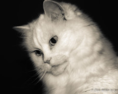 Kitty (DonMiller_ToGo) Tags: blackandwhitephotography portrait bwphotography blackwhite cat d5500 bw caturday cats nik
