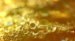 D'or et de lumire (annegbt) Tags: gouttelettes pluie feuille macro bokeh lumire or