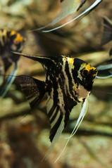 Acuario Agosto 2016 (56) (Fernando Soguero) Tags: acuario zaragoza acuariodezaragoza aragn turismo aquarium nikon d5000 fsoguero fernandosoguero