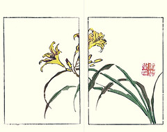 Late yellow day-lily (Japanese Flower and Bird Art) Tags: flower late yellow daylily hemerocallis thunbergii hemerocallidaceae buncho tani nanga woodblock picture book japan japanese art readercollection