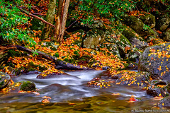 tranquility along the stream (Cottage Days) Tags: greatsmokymountainsnationalpark tennessee nationalpark stream autumn trees rocks landscape