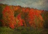 Fiery without a Flame (Passion4Nature) Tags: autumn trees color fall michigan textures upnorth ie netart leafpeepers antrimcounty moonseclipse memoriesbook yourpreferredphoto magicartoftextures magicuniverse magicunicornverybest textureinfinitebook