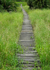 Along the Boardwalk (cowyeow) Tags: africa texture grass landscape african swamp tropical uganda grassland hotsprings semliki semlikinationalpark