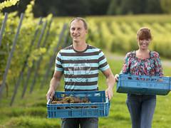 Heuvelland (VISITFLANDERS) Tags: vineyard europe belgium wine gastronomy flanders westhoek heuvelland visitflanders
