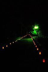 狭野神社の参道