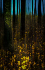 The turquoise clearing (Tore Thiis Fjeld) Tags: autumn light shadow color nature norway contrast forest movement woods nikon turqouise le d800