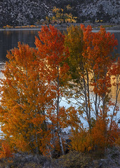 Sierra Autumn Color (el.merritt) Tags: california ca autumn lake tree water june october loop tripod sierra adobe aspen eastern 2012 monocounty cs5 lr4 esfallcolor emphoto41
