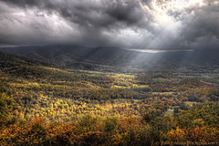 Autumn Flight (Tom Lussier Photography) Tags: usa mountain storm tree bird clouds forest landscape virginia landscapes nationalpark nikon fallcolor fallcolors shenandoah skylinedrive shenandoahnationalpark tomlussier dailyrayofhope2012 naturelandscapes2012 naturelandscaping2012