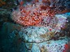 Plongée Aquanature 14-10-12
