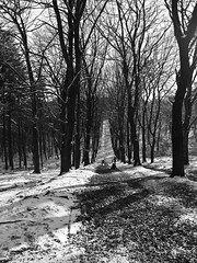 Winter Fun (MauriceVanGestel Photography) Tags: park wood schnee trees winter white snow cold holland tree blanco nature netherlands blackwhite nationalpark bomen woods zwartwit nieve sneeuw nederland natuur boom fresh national holanda invierno snowing nl february bos wit hoge frio olanda veluwe veluwezoom winterwonderland sneeuwpret vers winterfun freshsnow niederlande slee februari koud gelderland snowfun winterpret hogeveluwe helling bossen sneeuwval hollandia nationaalpark nationaal velp rozendaal winterweer sneeuwen sleen versesneeuw snowholland nationaalparkveluwezoom winternetherlands snownetherlands sneeuwnederland winternederland paksneeuw inviernoholanda schneeniederlande velprozendaal nieveholanda sneeuwveluwe rozendaalgelderland