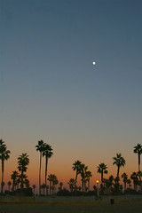 Autumn in San Diego (Shellnort) Tags: california sandiego sunsets palmtrees missionbeach