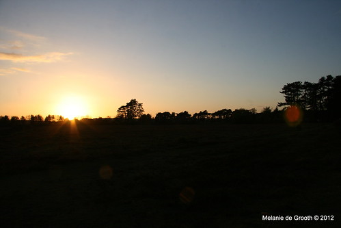 Sunset in the New Forest 2