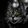 Cheshire cat (Michel Couprie) Tags: blackandwhite bw tree green halloween smile animal cat canon pose square eos eyes chat teeth evil 100mm creepy squareformat desaturation 7d lowkey arbre selectivecolor