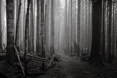 Sounds of a Dark Forest (Scott Withers Photography) Tags: oregon columbiarivergorge larchmountain canon2470mmf28ii