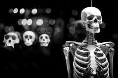 (David Crausby) Tags: blackandwhite halloween monochrome museum skulls manchester skeleton allhallowseve