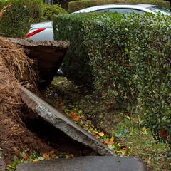 (EYECCD) Tags: autumn trees newyork fall leaves destruction down longisland cheers chuck suburbs 550d chuck2 chuck3 chuck4 flickrandroidapp:filter=none chuck6 chuck9 chuckedoutbythepigsty chuck5 chuck7 chuck8 chuck10 hurricanesandy