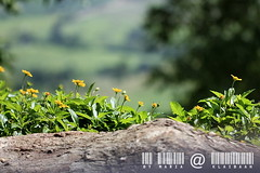 KhaoYai view by มาเรีย ณ ไกลบ้าน_G7202358-030