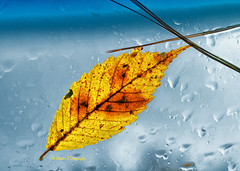 After the storm... (ruthiedee) Tags: autumn fall yellow backlight leaf throughthecarwindow beechleaf