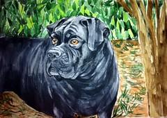 Zulu, by Luiza (Dona Mincia) Tags: dog art co watercolor painting paper study cachorro zulu aquarela