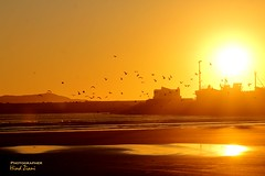 Essaouira Sunset. (hinda De La Rose) Tags: sunset sun beach birds boats calm romance morocco essaouira seabirds romanticview