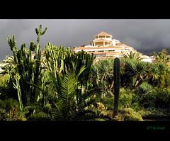 (thirau) Tags: travel nature natur tenerife teneriffa canaryislands kanarischeinsel thirau hotelbahiaplaya hrauk