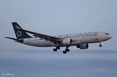 TAP Air Portugal (Star Alliance Livery) A330-200 CS-TOH (birrlad) Tags: lisbon lis international airport portugal aircraft aviation airplane airplanes airline airliner airlines airways approach arrival arriving finals landing landed runway dawn sunrise morning airbus a330 a332 a330200 a330223 cstoh star alliance livery colour scheme decals titles tp22 airportugal salvador brazil tap